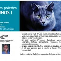 """FELINOS I, primera jornada del """"Programa de Formación de Clínicas Veterinarias 2016""""."""