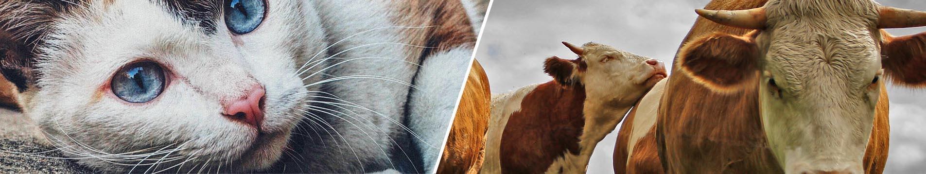 Productos para ANIMALES DE COMPAÑÍA y para GANADERÍA