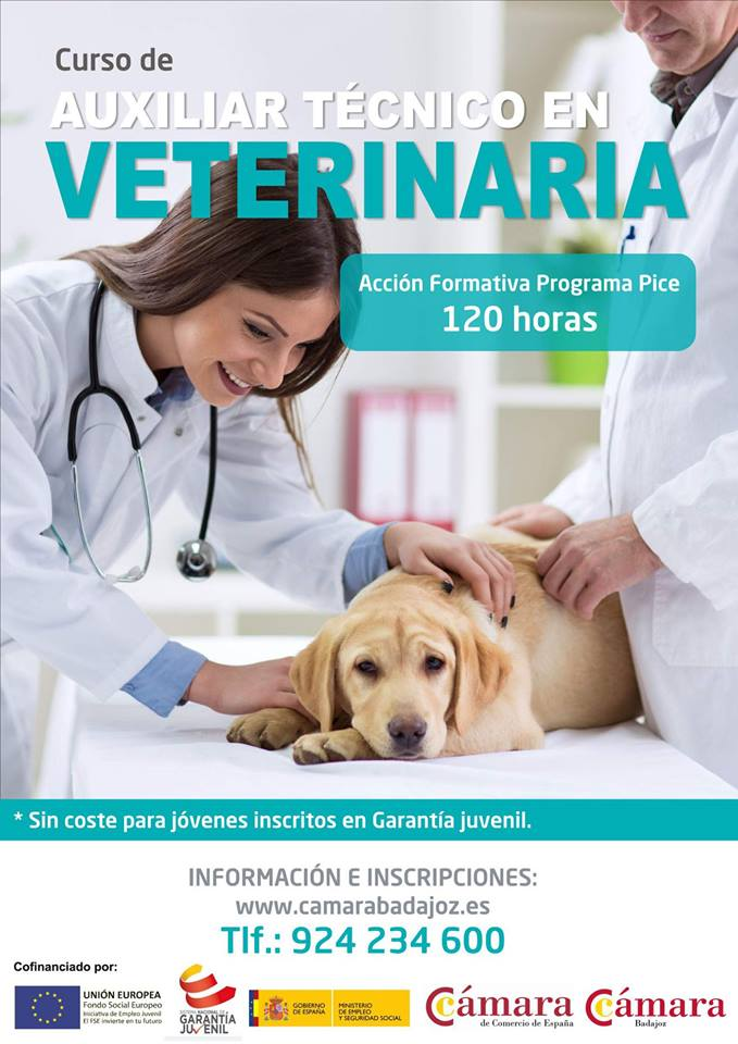 Nuevo comienzo curso Auxiliar Técnico en Veterinaria