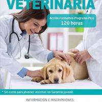 """Nueva edición del curso """"Auxiliar Técnico en Veterinaria"""""""
